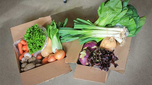 Thanks to a collaboration of six farms in Maine and New Hampshire, Foothill Farm Alliance is able to offer fresh veggies from December through late January. Their weekly deliveries are typically overflowing with fresh goodness.