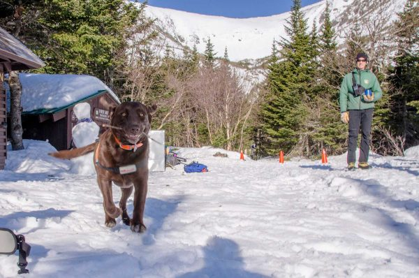 Skiing with Dogs in on Mount Washington, Tuckerman Ravine